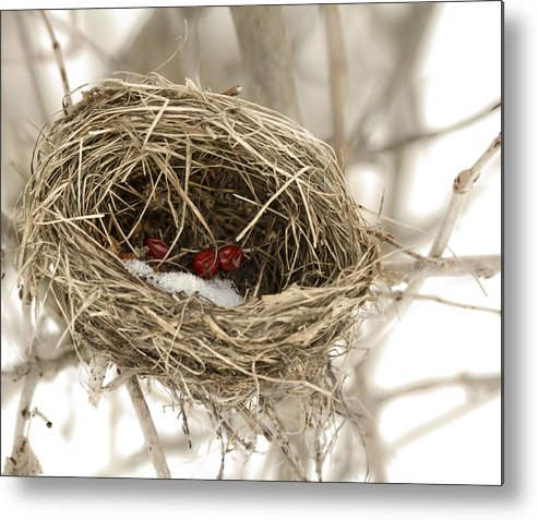 Nest Metal Print featuring the photograph Abandoned by Nick Mares