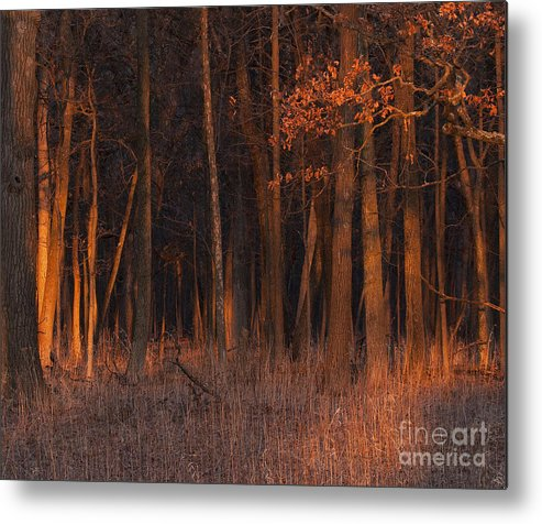 Sunset Metal Print featuring the photograph Forest At Sunset by Emma England