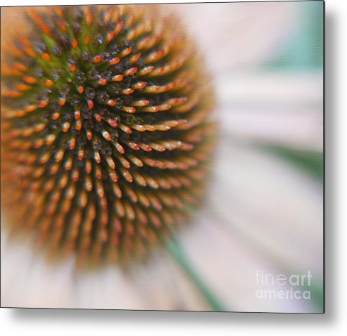 Fine Art Floral Macro Metal Print featuring the photograph Sea Hedgehog by Irina Wardas