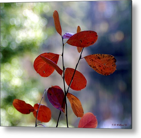 2d Metal Print featuring the photograph Summer's End by Brian Wallace