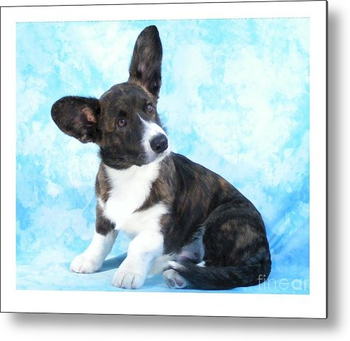 Corgi Metal Print featuring the digital art Corgi 465 by Larry Matthews