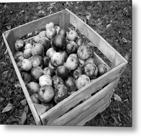 Apples Metal Print featuring the photograph Crate Of Wellness by Michael Jalbert
