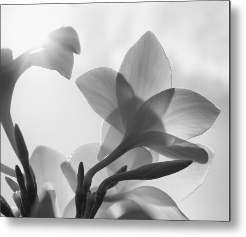 White Metal Print featuring the photograph White Flower In The Sun by Charles Garrett