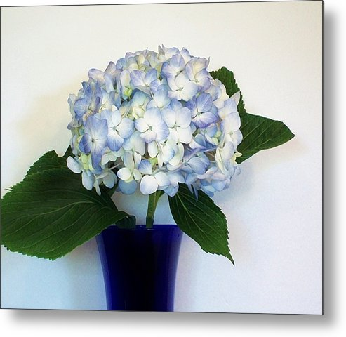 Photo Metal Print featuring the photograph Blue Hue Hydrangea by Marsha Heiken