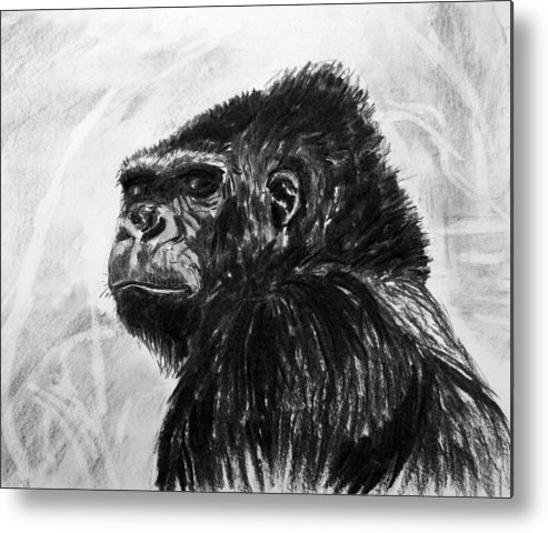Gorilla. Animal Natural History. Charcoal. Metal Print featuring the painting Gorilla by John Cox