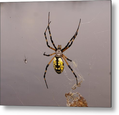 Spiders Metal Print featuring the photograph Hanging In There by Debbie May