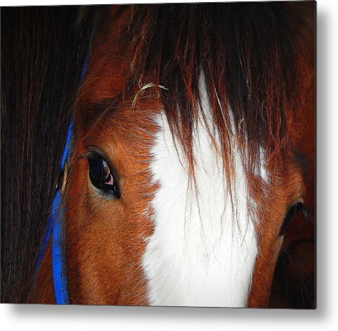 Heart And Soul Metal Print featuring the photograph Heart And Soul by Karen Cook