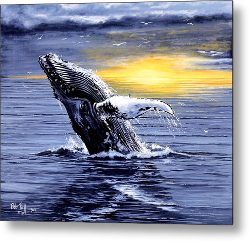 Wahles Metal Print featuring the painting Humpback Whale Breaching by Bob Patterson