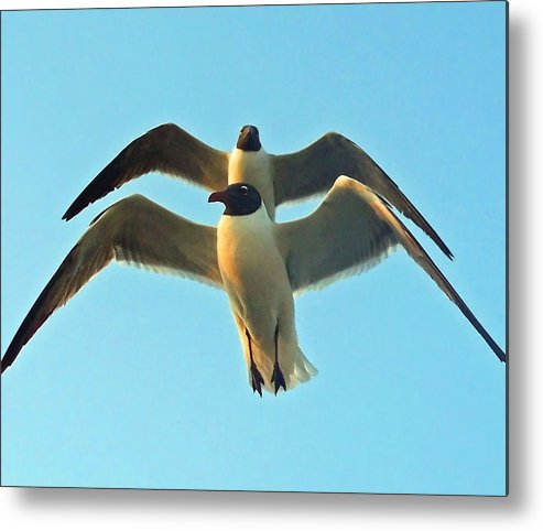 Seagulls Metal Print featuring the photograph In Tandem At Sunset by Sandi OReilly