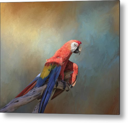 Macaw Metal Print featuring the photograph Polly Want A Cracker by Kim Hojnacki