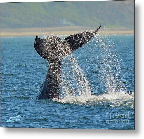 Whale Metal Print featuring the photograph Whale Waterfall by Laryssa Densmore
