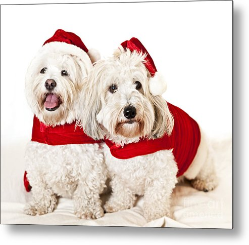 Dogs Metal Print featuring the photograph Two Cute Dogs In Santa Outfits by Elena Elisseeva