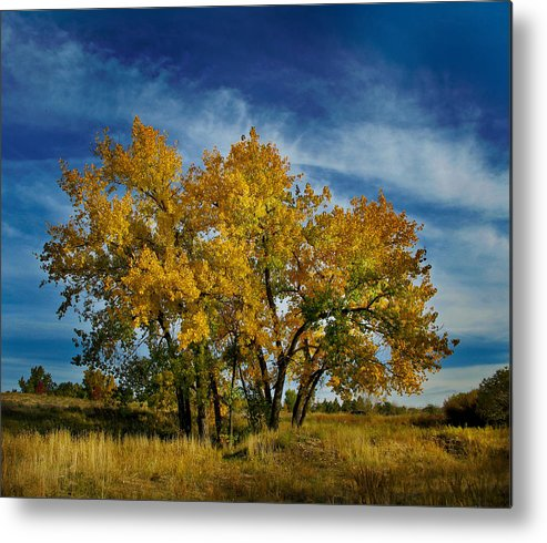 Trees Metal Print featuring the photograph 3266 by Peter Holme III