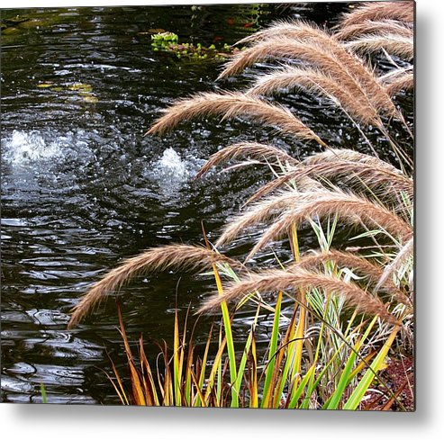 Purple Fountain Grass Metal Print featuring the photograph Fountain Grass by MTBobbins Photography