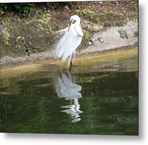 Great Egret Metal Print featuring the photograph Great Egret In The Lake by Zina Stromberg
