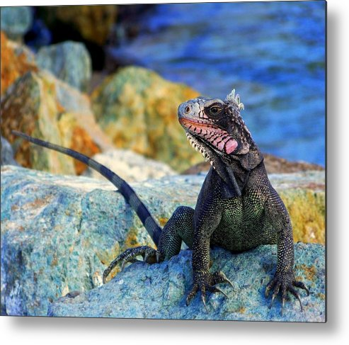 Iguana Metal Print featuring the photograph On The Prowl by Karen Wiles