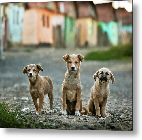 Animals Metal Print featuring the photograph The Three Musketeers by Sorin Onisor