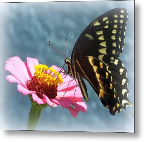 Butterfly Metal Print featuring the photograph Butterfly by Cynthia Amaral