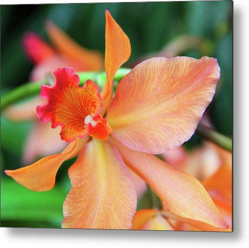 Becky Metal Print featuring the photograph Orchids 25 by Becky Lodes
