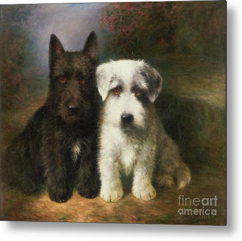 Dogs Metal Print Featuring The Painting A Scottish And Sealyham Terrier By Lilian Cheviot