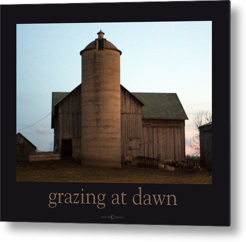 Barn Metal Print featuring the photograph Grazing At Dawn by Tim Nyberg