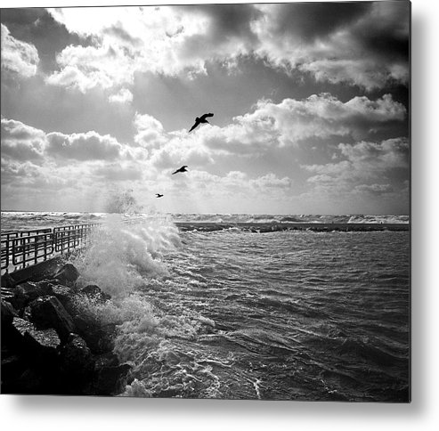 Gulls In A Gale Metal Print featuring the photograph Gulls In A Gale by James Rasmusson