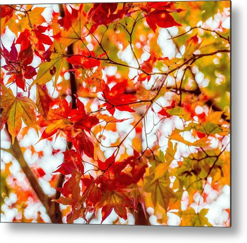 Red Metal Print featuring the photograph Red On A Tree by Hyuntae Kim