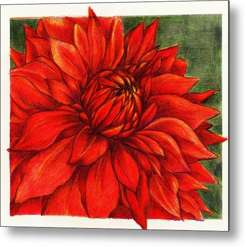 Original Art Metal Print featuring the drawing Red Mums by Rae Chichilnitsky