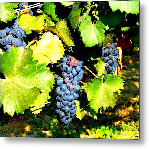 Grapes Metal Print featuring the photograph A Bunch Of Grapes by Kay Gilley