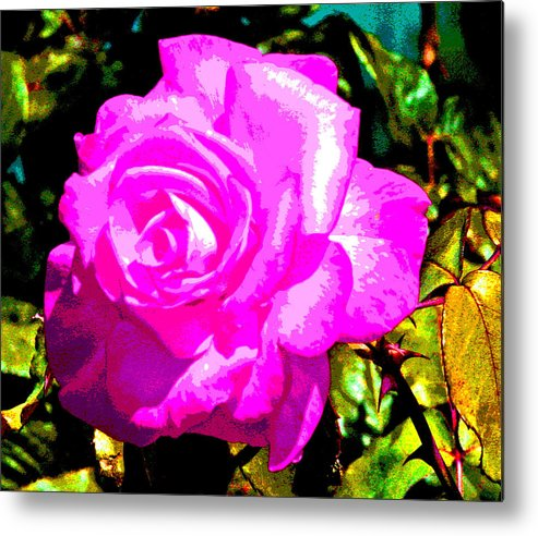 Rose Metal Print featuring the photograph A Delta Rose by Joseph Coulombe