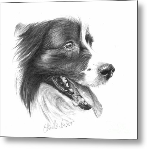 Dog Metal Print featuring the drawing Border Grin by Sheona Hamilton-Grant