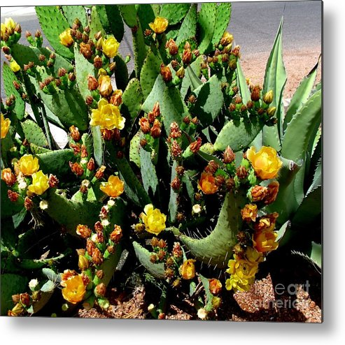 Cactus Metal Print featuring the photograph Cacti by Fred Wilson
