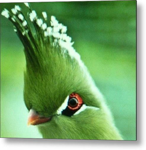 Metal Print featuring the photograph Exotic Birds by Gunter Hortz