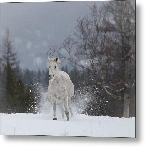 Montana Horses Metal Print featuring the photograph Fast Traveling by Diane Bohna