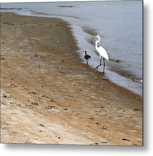 North Carolina Metal Print featuring the photograph Me And My Buddy by Rand Wall