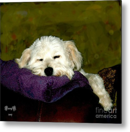 Pet Metal Print featuring the digital art Ms Sally by Terry Burgess