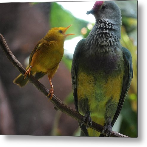 Birds Metal Print featuring the photograph The Odd Couple by Joe Bledsoe