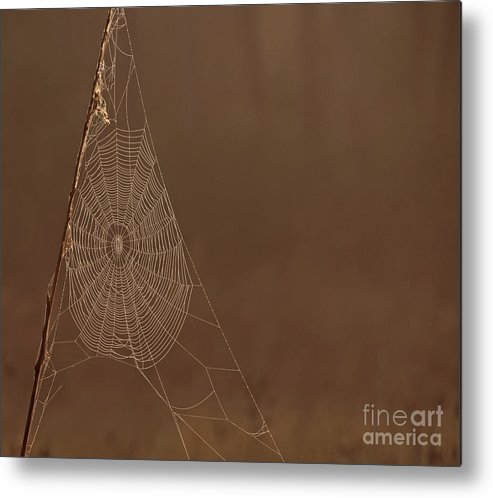 Sunrise Metal Print featuring the photograph Triangle Web by Roy Thoman