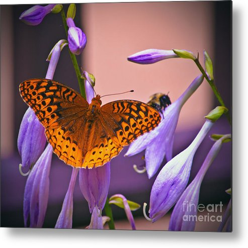 Butterfly Metal Print featuring the photograph Waiting For You by Bill Kolodzieski