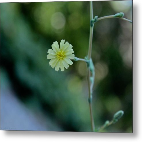 Flower Metal Print featuring the photograph Yellow Flower by Stephanie Beller