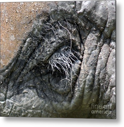 Elephant Metal Print featuring the photograph Elephant Eyelash by Joanne Kocwin