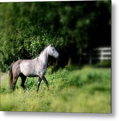Horse Metal Print featuring the painting Graceful Stride by Melodie Douglas