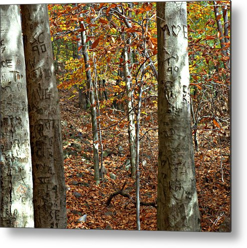 Trees Metal Print featuring the photograph Graffiti Trees by Bruce Carpenter
