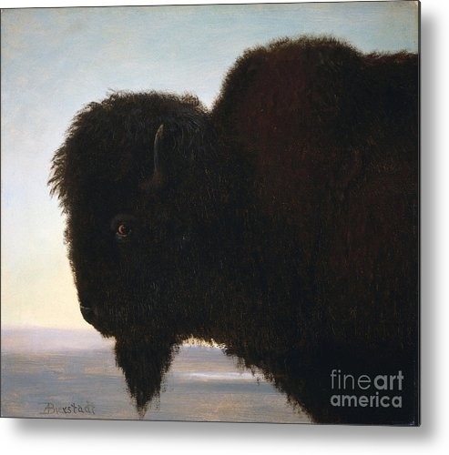 Albert Bierstadt Metal Print featuring the painting Buffalo Head by Celestial Images
