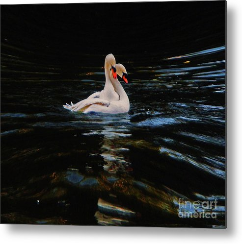 Swans Metal Print featuring the photograph Swans by Daniele Smith