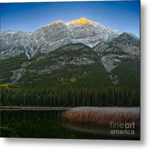 Landscape Metal Print featuring the photograph Alpenglow Over Frosty Reeds by Royce Howland