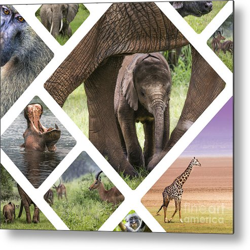Outdoor Metal Print featuring the photograph Collage Of Animals From Tanzania by Mariusz Prusaczyk
