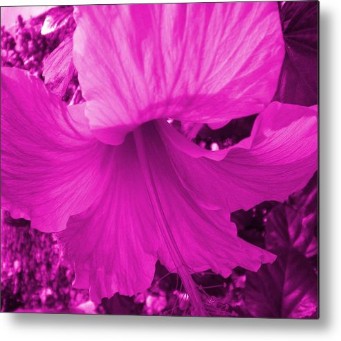Metal Print featuring the photograph Flower Maddness by Aleksandra Buha
