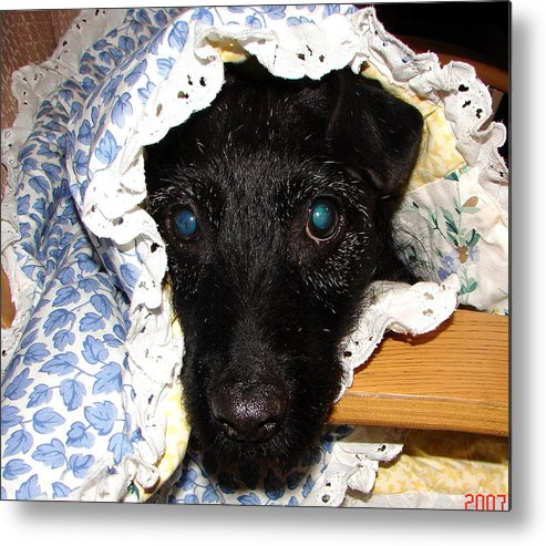 Black Dog Metal Print featuring the photograph My Little Darlin' by Belinda Consten