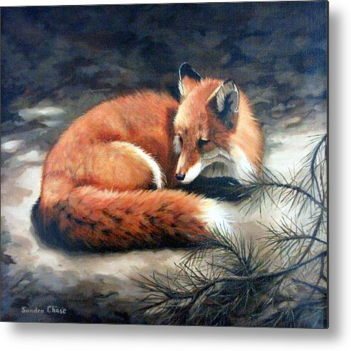 Red Fox Metal Print featuring the painting Naptime In The Pine Barrens by Sandra Chase